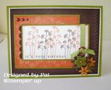 Pocket Silhouettes